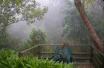 Garden in the fog